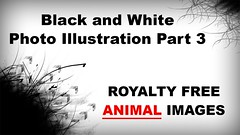 Black and White Photo Illustration Part 3 by Photo Garage - Royalty Free Animal Photo Album (photo_garage) Tags: photography photo image snap photographer garage