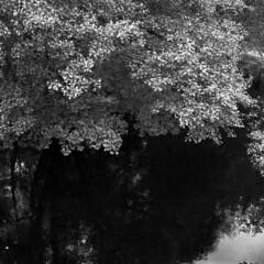 Arax60mlu/mir38b/HP5+ (Jonas.Nilsson) Tags: arax60mlu mir38b hp5 ilford xtol 6x6 square mediumformat mf monochrome blackandwhite bw believeinfilm filmphotography film filmisnotdead iamfilm