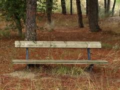 Banco en pinar (Javier Garcia Alarcon) Tags: banco asiento bank bench parkbench