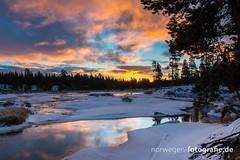 DSC02563 (norwegen-fotografie.de) Tags: norw norwegen norway norge femunden femundsmarka villmark hedmark see wildnis wald landschaft