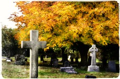 Dying Amongst The Dead (Michelle O'Connell Photography) Tags: glasgow lambhillcemetery gravestones graveyard burialground autumn fallenleaves fall tree michelleoconnellphotography