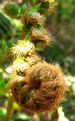 "Unfurling • <a style=""font-size:0.8em;"" href=""http://www.flickr.com/photos/59379462@N08/30146242921/"" target=""_blank"">View on Flickr</a>"