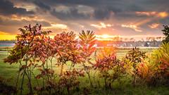 Sunset (exploration) (Lasorigin) Tags: coucherdesoleil arbre feuilles champ herbe paysage nuage vert orange fushsia rose gris tree leaves field grass landscape cloud green pink gray
