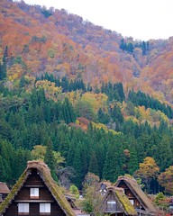 Fall color (Frank Fujimoto) Tags: ogimachi japan p366