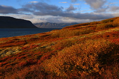 Iceland autumn (h) Tags: autumn iceland fall colours colors fossfjrur arnarfjrur barastrandarssla clouds shrub landscape september 2016