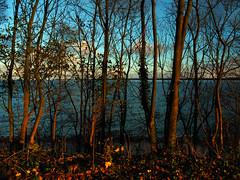 Sunny view (Ostseeleuchte) Tags: sunnyview autumnlight balticsea steepbank brodtenersteilufer steilufer ostsee wanderweg niendorftravemünde herbstsonne autumnsun germany november 2016
