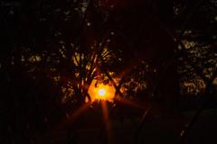 Fenced Sunset (SerpaDesign) Tags: sunset light rays bright frame framed fence night evening dusk cage tannerserpa serpadesign