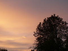my horse chestnut tree (achatphoenix) Tags: tree sun horsechestnuttree home sunset sky evening coucherdusoleil arbre soir soleil eastfrisia