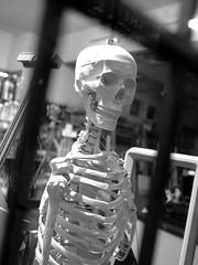 skeletal (Ian Muttoo) Tags: dsc56251edit ufraw gimp toronto ontario canada bw skeleton skull store shop window street reflection reflections