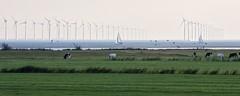 Windpark Noordoostpolder (DeLaPorte_NL) Tags: wind turbine ijsselmeer lake water cows grass meadow sailing ship friesland noordoostpolder gaasterland