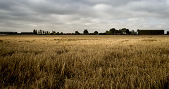 All summers must end (Anxious Silence) Tags: oxfordshire haddenham landscape rural farmland crops treeline outdoor contrast