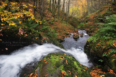 Otoo (PMagonza) Tags: water river bosque otoo verde amarillo green yellow forest outum asturias fuji xt10