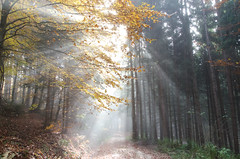 20161030-WOL_7723.jpg (viennalinux) Tags: spaziergang nebel herbst nature tauern fog natur ossiach ossiacher