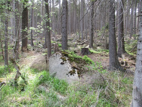 Moose, Granitfelsblock im Nationalpark Harz , NGID1150262981