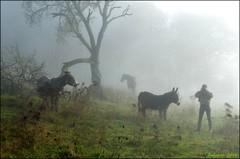 ~~ Quatre Filles dans la brume...~~ (Jolisa) Tags: quatre brume mist fog brouillard glay elisa ninon margot jo jolisa novembre2016