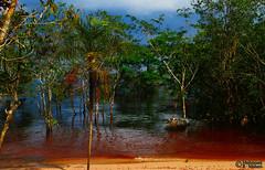 The Amazon (Mahmoud R Maheri) Tags: landscape river amazon brazil brasil manuas trees rainforest bank water amazonforest