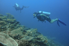 Bengt hovering (Sven Rudolf Jan) Tags: tufi papuanewguinea diving corals divers jan hasselberg