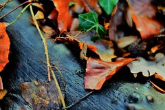 litte fly (sebastianhillemann) Tags: explore nature 35mm fuj fuji xt1 laub foliage contrast bokeh close wald forrest fly  plant green wood insect autumn herbst