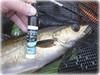 Fish Dynamix (Nicolas Valentin) Tags: fish dynamix fishdynamix pollock bioedge lipstick