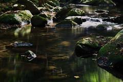 Oct2016 South Mtn State Park 22 (furrycelt) Tags: jacobsforkriver jacobsfork nikon85mmf14afd nikon85mmf14 northcarolina southmountainstatepark southmountains ianwilson jianwilson photographersoftumblr 85mm d600 nc nikon october autumn fall forest furrycelt leaves lensblr natural nature river rocks sunlight trees water woods