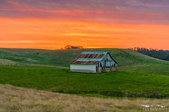 Bright Future - Sacramento County, California (Tactile Photo | Greg Mitchell Photography) Tags: fineart interiordesign landscape michiganbarroad rollinghills saturday white oldbarn clouds greengrass morning november sunrise barn cattle sacramentocounty jacksonhwy ranchomurieta cattleranch sacramento california color wallart sloughhouse field