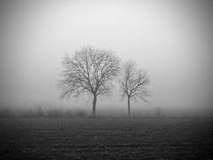 Hedgehog in the Fog (-Aldievel-) Tags: foggy monocrome trees italy italia fog fields home molise nebbia casa alberi campi blackandwhite biancoenero