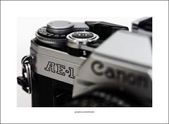 Canon AE-1 (Descended from Ding the Devil) Tags: canon40d canonae1 canonefs60mmmacro dof macro beyondbokeh bokeh closeup depthoffield photoborder primelens selectivefocus