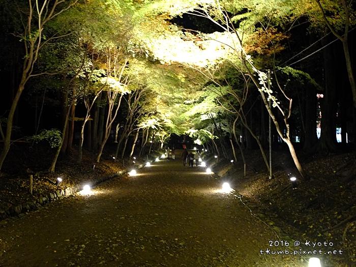 2016醍醐寺夜楓2.JPG