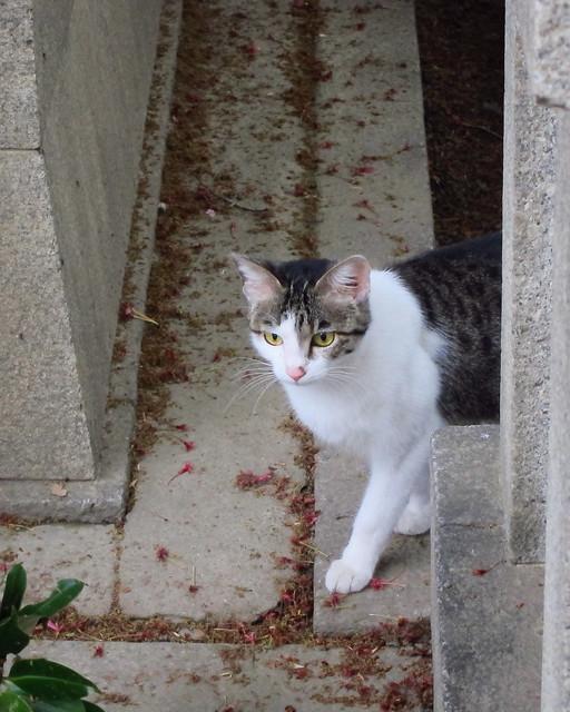 Today's Cat@2012-04-26