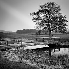 The Tree By The Brook.. (Peter Levi) Tags: wood bridge blackandwhite bw tree blancoynegro water grass forrest sweden stockholm brook bestcapturesaoi elitegalleryaoi dblringexcellence tplringexcellence