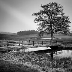 The Tree By The Brook.. (Peter Levi) Tags: wood bridge blackandwhite bw tree blancoynegro water grass forrest sweden stockholm brook bestcapturesaoi elitegalleryaoi dblringexcellence tplringexcellence