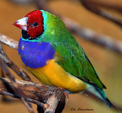 Pretty As A Rainbow (The Lovelace Photography) Tags: ringexcellence flickrstruereflection1 rememberthatmomentlevel1 me2youphotographylevel1 soulocreativity1