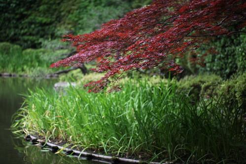 初夏の白虎池