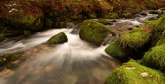 A NATURAL FLOW OF THINGS (russell D7000 (D80)) Tags: water beauty rocks long exposure devon brook dartmoor mosses narrator burrator riverscape sheepstor