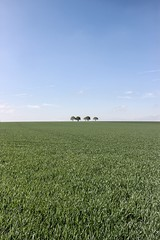 Lonely trees unsat (NicVW) Tags: blue sky tree field clouds belgium empty meadow void liege wanze braives hesbay