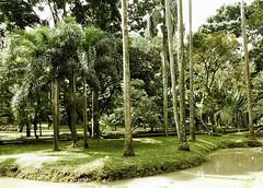 taman lansia langsat (esavitri) Tags: park landscape langsat penghijauan tamankota