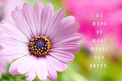 Do More of What Makes YOU Happy! (KatieWhitaker) Tags: flower true contrast fun happy pretty bright quote vibrant low happiness bloom