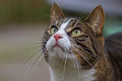 IMG_7998 (Esjuhbesjuh) Tags: pet cats pets cat katten kat kitty esther huisdier poes kater htk huisdieren vinju