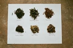 Tea (furtivefoxes) Tags: film 35mm tea olympus greentea rooibos oolong blacktea olympusomg olympusom20 breakfasttea looseleaftea