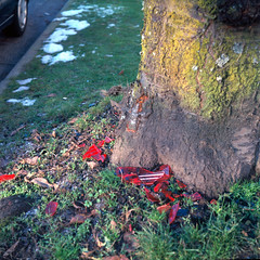 Back up (Justin Berger) Tags: red tree 120 film broken square minolta kodak medium format taillight autocord ektar100