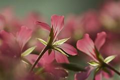逆光 Against The Light (Anna Kwa) Tags: flowers light macro art nature marina singapore flowerdome gardenbythebay