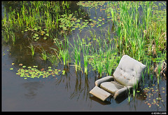 Swamp Chair (Kevin In Canada) Tags: gettyimages