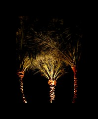 3 Palms (Blrryi) Tags: light tree nature nikon shadows egypt d3000 blrryi jazmirabelpark
