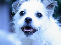 """Michael & Amaryllis Steinberg's dog Conchta • <a style=""""font-size:0.8em;"""" href=""""http://www.flickr.com/photos/95808399@N03/8942351032/"""" target=""""_blank"""">View on Flickr</a>"""