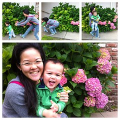 How to take a picture with a toddler #hydrangeas (sourskittled) Tags: flowers square vincent running diane squareformat frontyard hydrangeas iphoneography instagramapp uploaded:by=instagram