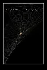 Common garden spider, Araneus diadematus on web-41 (Scott A. McNealy @noboundaryphotography) Tags: uk greatbritain england macro spider unitedkingdom geometry wildlife web arachnid wildanimal predator spidersweb englishcountryside araneusdiadematus britishcountryside englishsummer spidersilk commongardenspider spideweb spideratnight 2013 spiderinweb greatbritishsummer animalsatnight scottamcnealy commongardenspideraraneusdiadematus wwwnoboundaryphotographycouk summerofwildlife seeitsnapitshareit seeitsnapitshareitsummerofwildlife briitshsummer brititshsummer spideronwebatnight