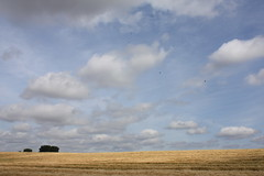 Pauki (Wielkopolska), Poland (LeszekZadlo) Tags: ranch summer naturaleza nature field clouds landscape countryside europe outdoor natureza harvest eu poland polska paisaje pole polen campo agriculture landschaft polonia ue pologne wielkopolska pejza pauki