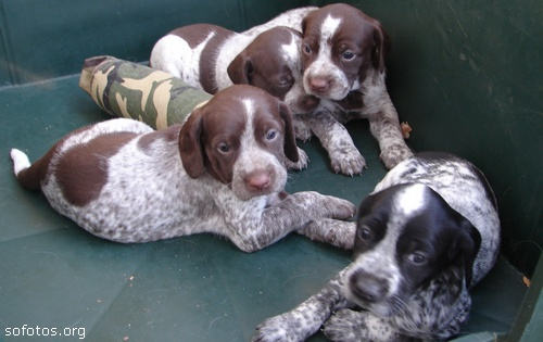 Filhotes de cachorros 78