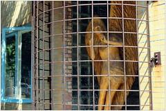 Barn Angel (BalineseCat) Tags: wood sculpture chicago barn village angels augusta bucktown ukranian