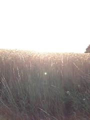 There's a light ... (-masru-) Tags: feld niedermohr